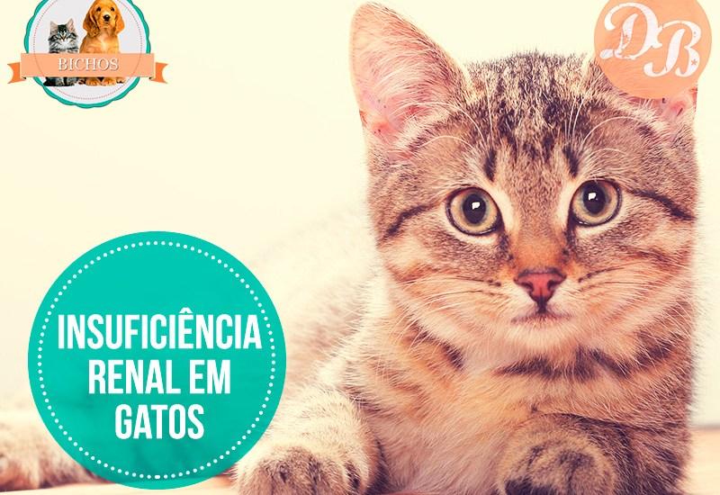 Insuficiência renal em gatos
