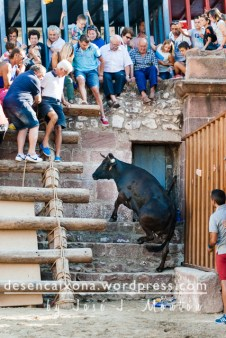 Vaca de La Paloma en Vilafamés.