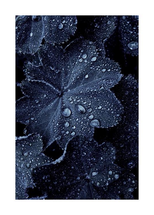 raindrops on blue leaves