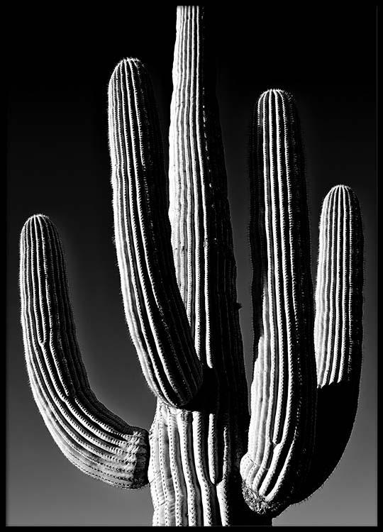 dark cactus poster