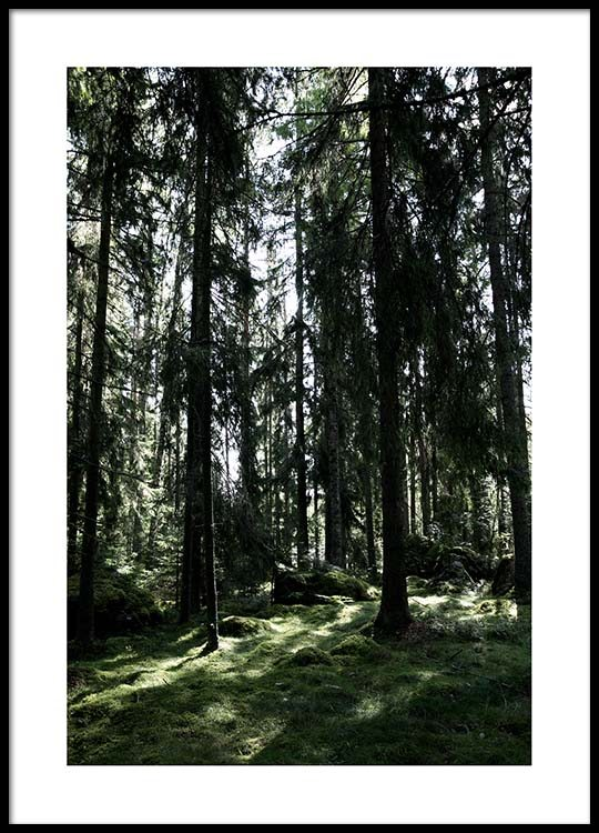 forest trees poster