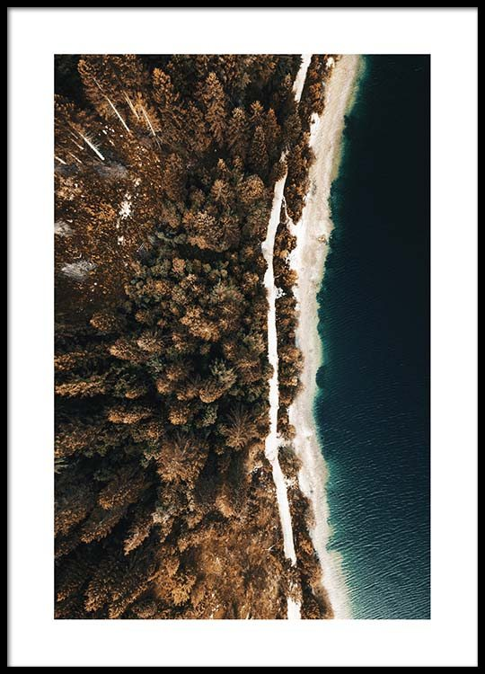 forest trees aerial poster