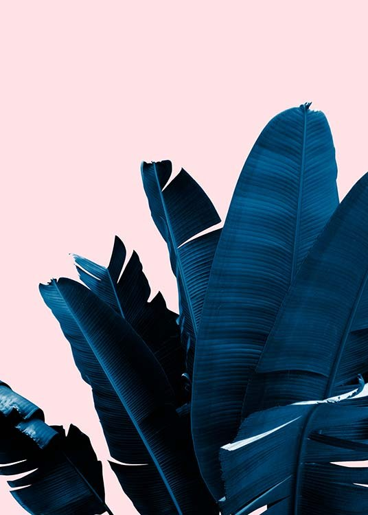 blue leaves on pink