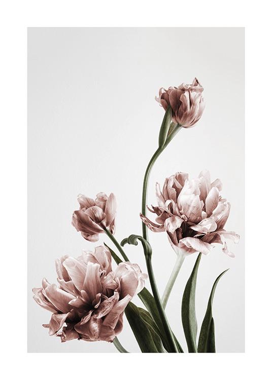 Botanisches Pflanzenposter mit rosa Tulpen