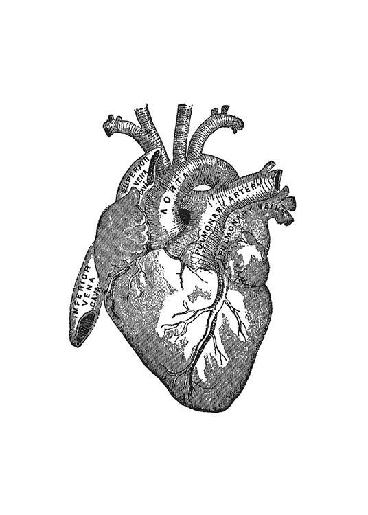 Poster mit Anatomie des menschlichen Herzens Illustration