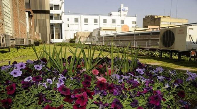 Cultivo de vegetação nos telhados de casas