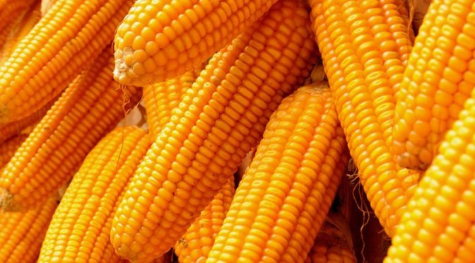 Alimentos dourados ricos em vitamina A são importantes para a saúde