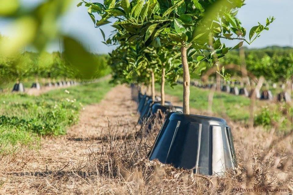 Tree T-PEE: reduz em até 90% a necessidade de água e fertilizantes