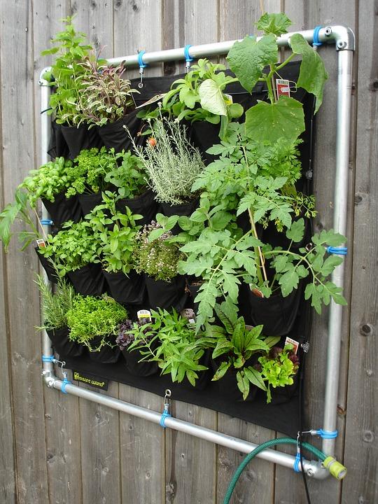 Horta vertical é uma alternativa para produção de verduras nas cidades