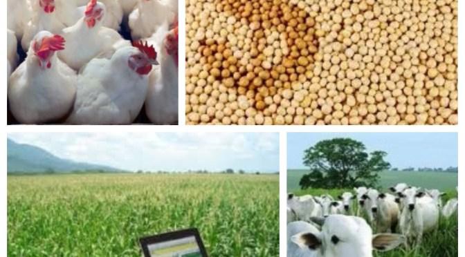 EUA lança um serviço mundial de informações de preços do mercado agrícola