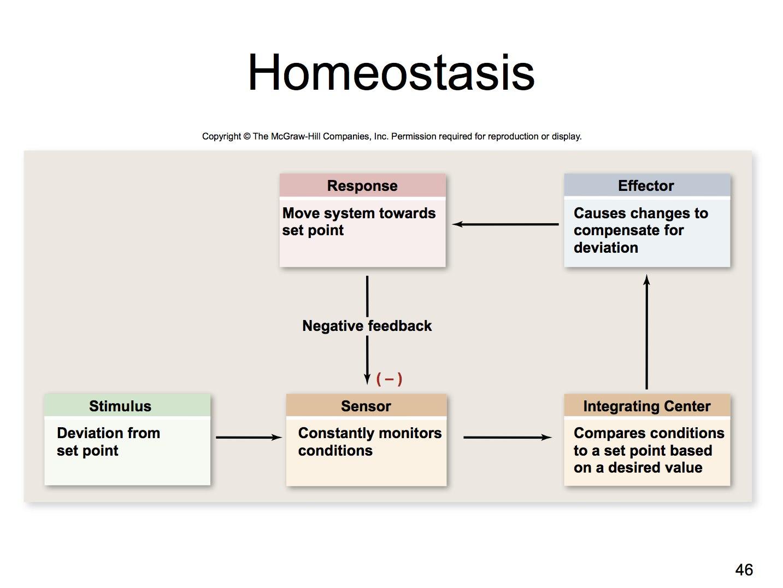 Hormone Actions Worksheet