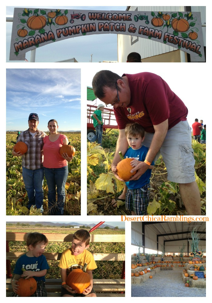 Marana AZ Pumpkin Patch Pumpking Picking
