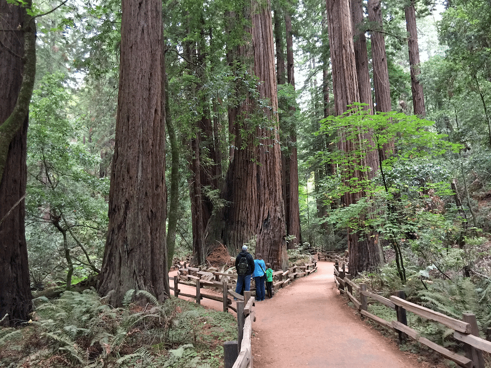 visiting-muir-woods-in-san-franscico-with-kids