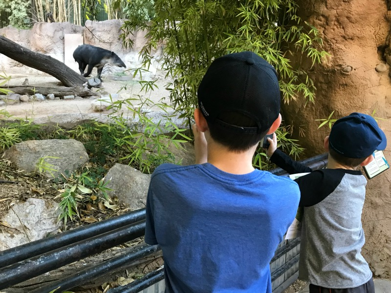 Fun Things to do in Tucson with kids including the popular Tucson attraction: Reid park Zoo