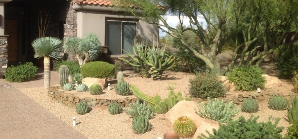 xeriscaping interest landscaping