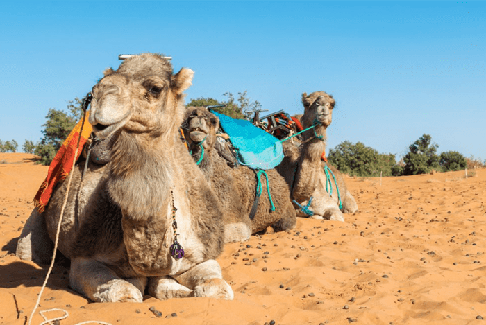 4-day desert tour Marrakech to Fes