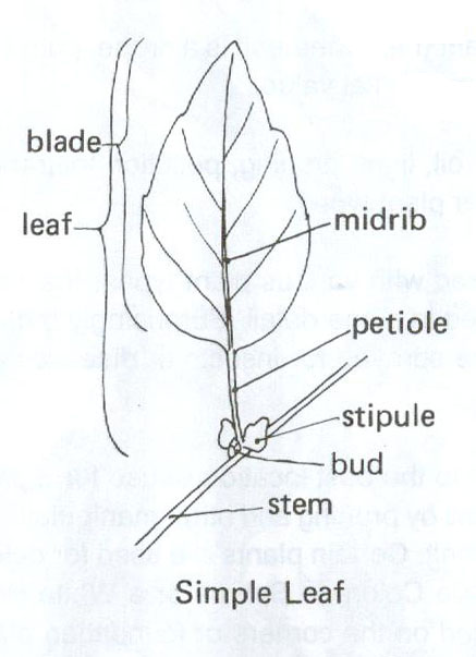 Types of Leaves « Horticulture in the Desert