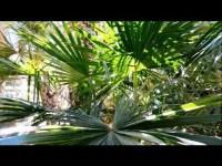 Growing Food in the Desert  Winter Vegetable Garden in ...