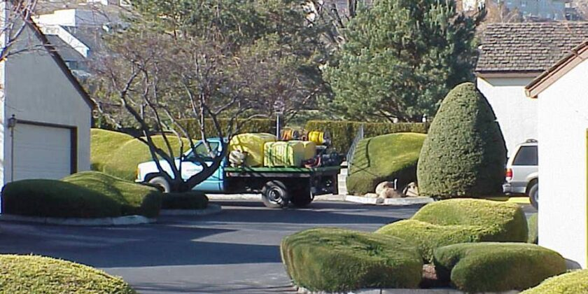 Tree shrub and lawn maintenance
