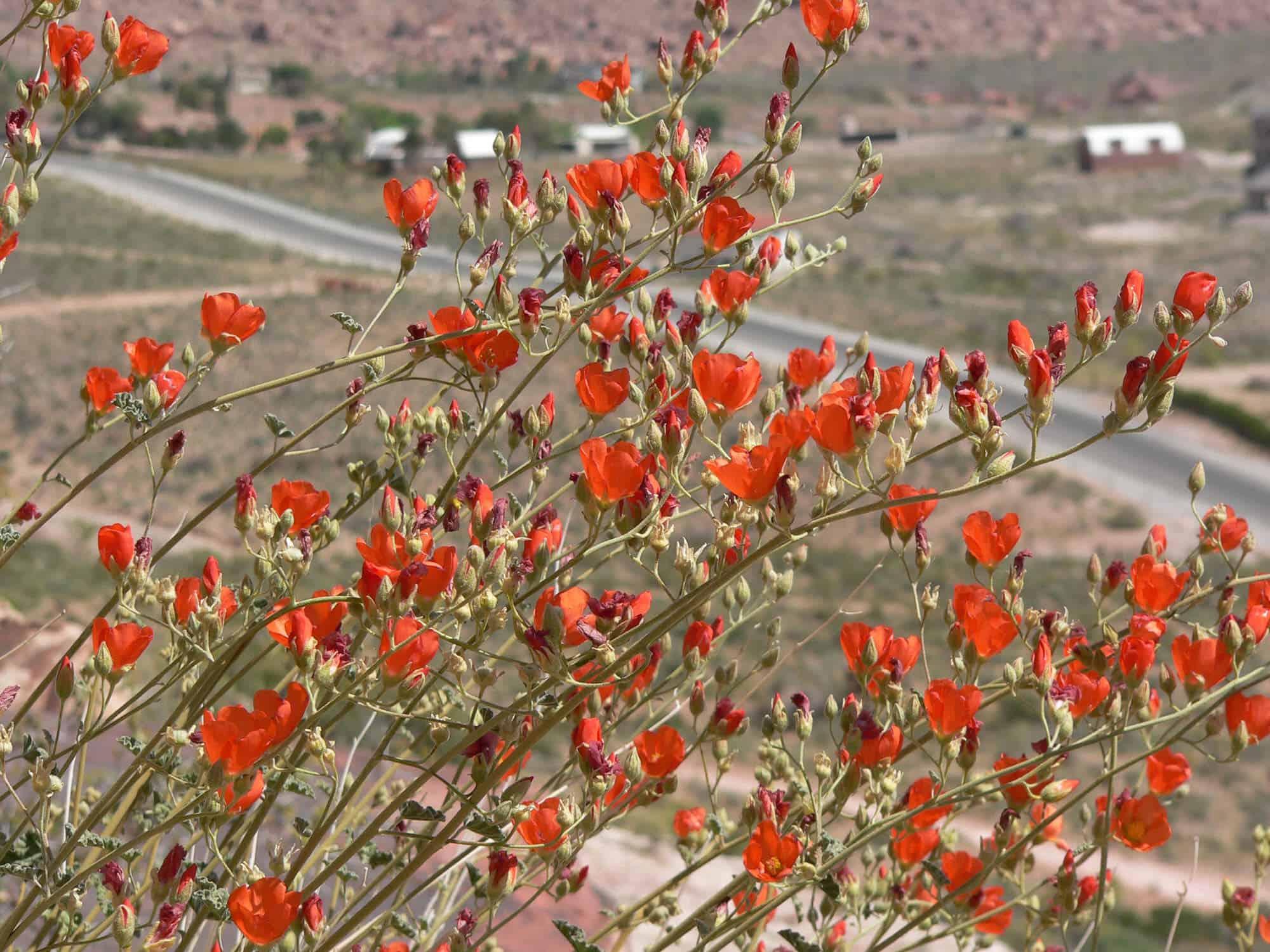 Orange Flowering Plants Low Water