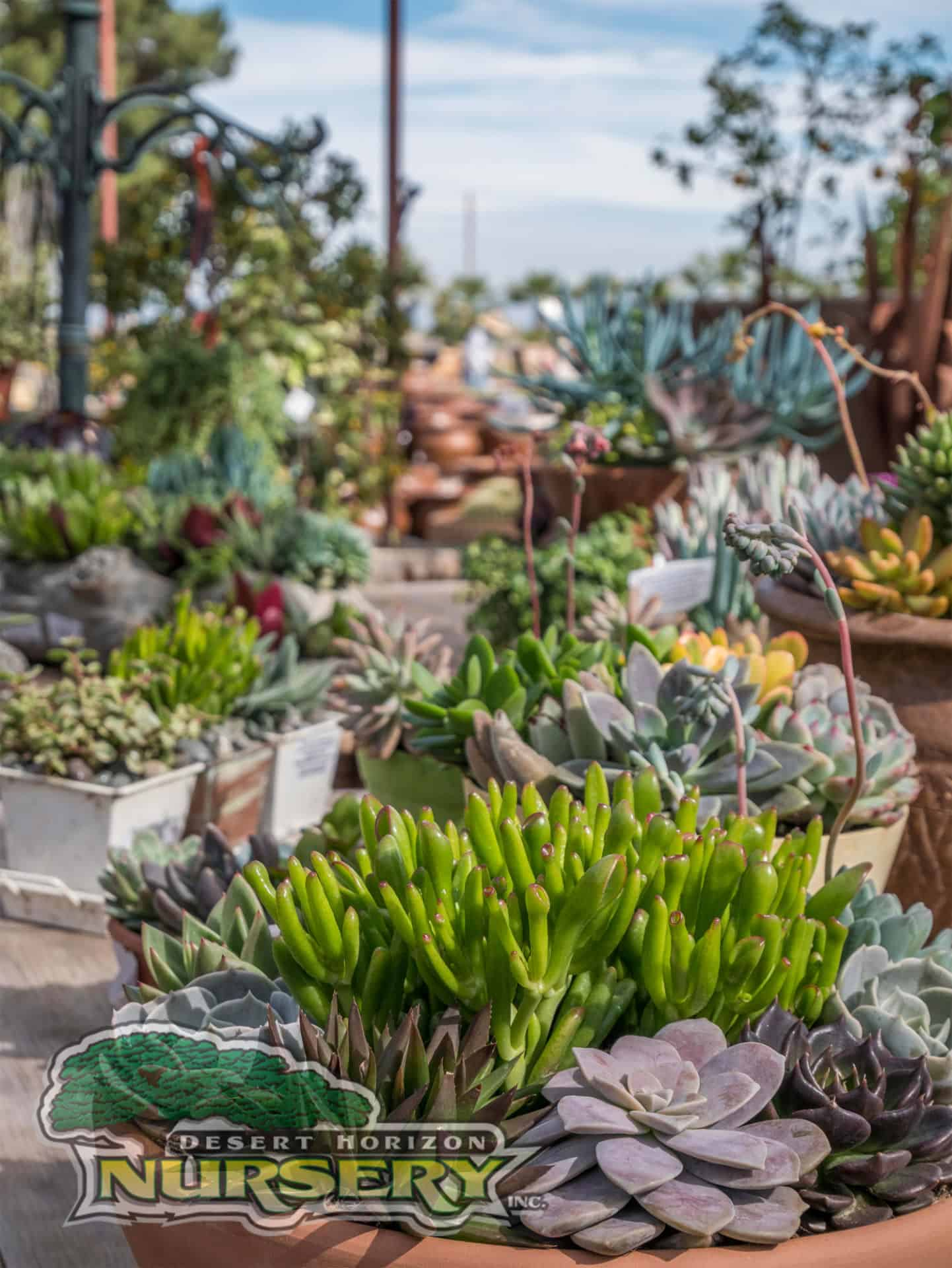 Succulents for sale in the Phoenix area  Desert Horizon Nursery