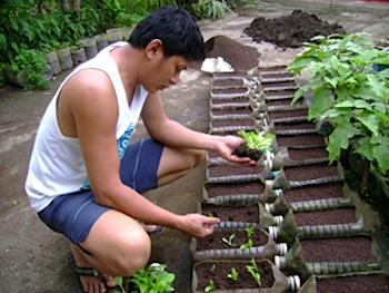 "Follow Urban Farmer Perfecto ""Jojo"" Rom Philippines – CONTAINER"
