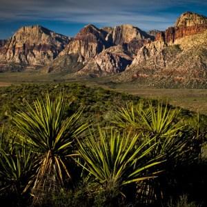 yucca-desert