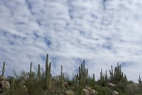 Not your typical desert sky above the saguaros.