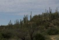 Goodbye saguaro forest - until next time!