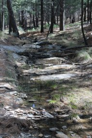 Flowing water along the trail!