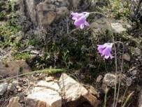 The brodieaea were every hue of blue-purple.