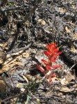 The first paintbrush of the season!