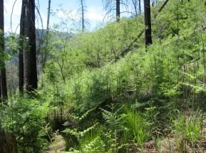 The ferns are shoulder-high.