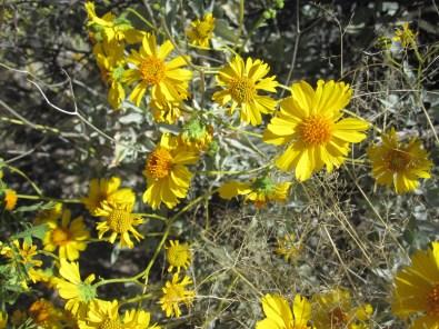 Closeup of bright yellow flowers.