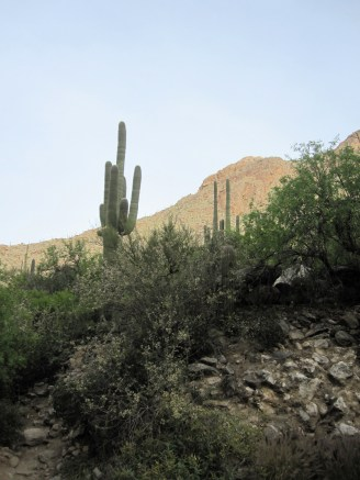 Saguaro from the stream bed.