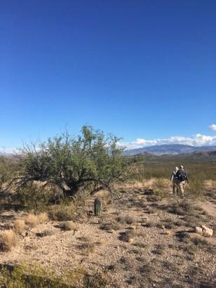 Young saguaro above Davidson Canyon.
