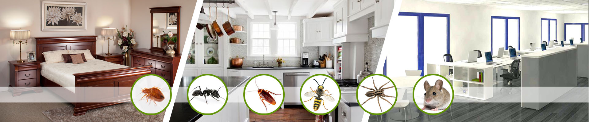 collection-of-pest-desert-pest-control