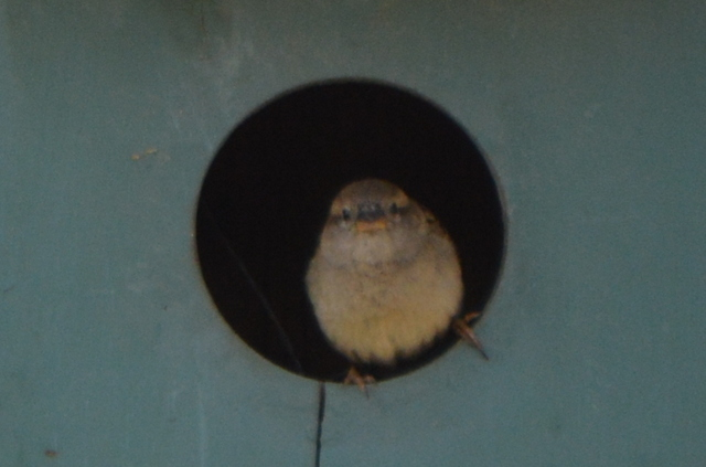 This little bird is checking out his neighborhood.