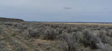 Basin sagebrush, Artemisia tridentata, of the Great Baisn and Colorado Plateau.