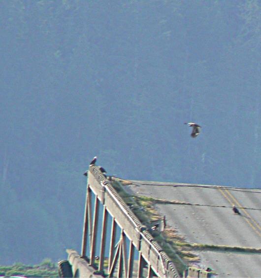Neah Bay Eagles 3