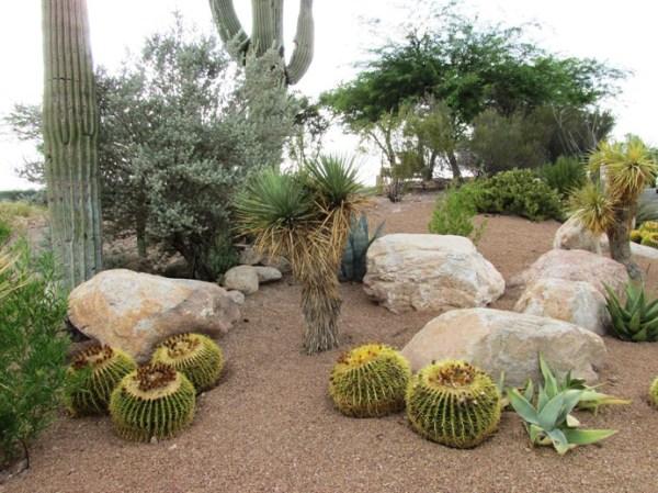 8 steps diy xeriscape landscape