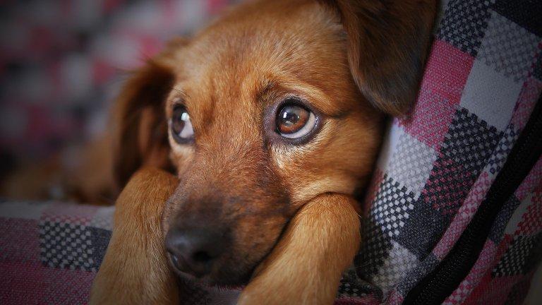 Primer plano de la cabeza de un cachorro marrón apoyado en un sofá