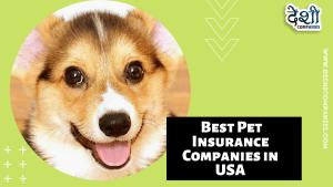 Best Pet Insurance Companies in USA   Deshi Companies