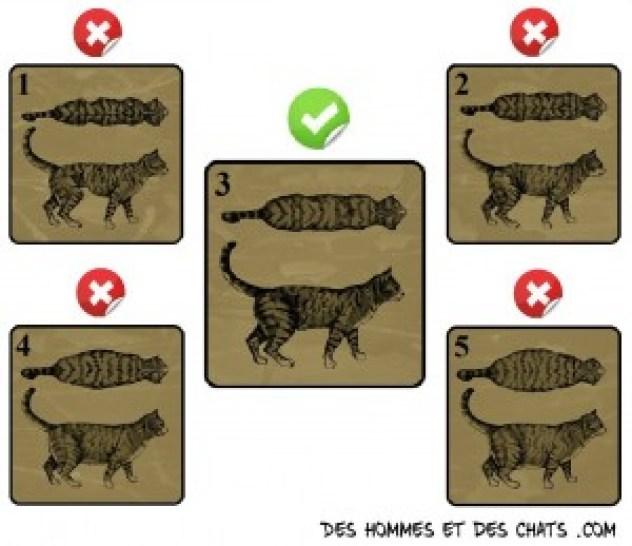 Morphologie chat croquette quantité nourriture combien manger calorie régime