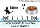 Quelle quantité de nourriture pour un chaton ?