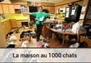 La maison au 1000 chats