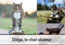 Didga le chat skateur