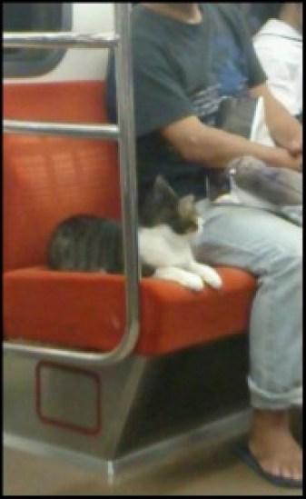 humour chaton rigolo chat drôle funny cat