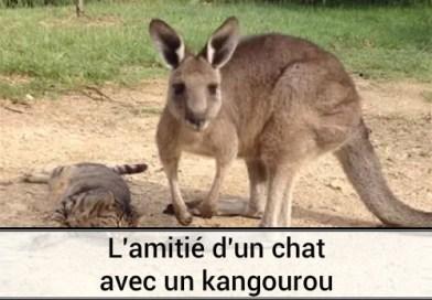 L'amitié d'un chat avec un Kangourou en Australie