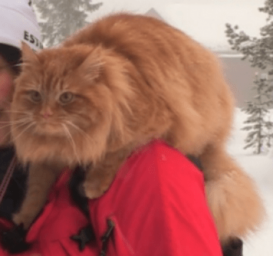 Jesper cat ski traineau chat marrant rigolo drôle chaton